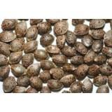 Pack de 5 semillas auto granel
