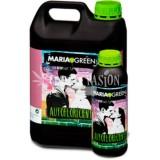 Maria Green Autofloreciente
